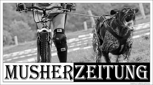 Dogscooting - Zughundesport - Musherzeitung