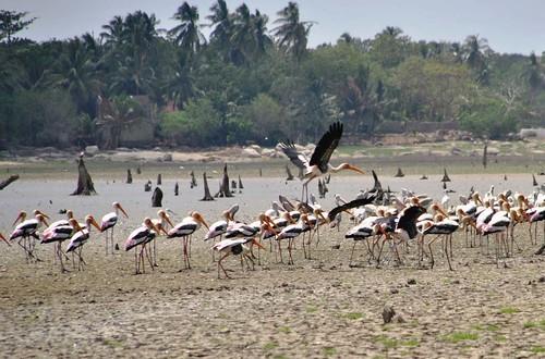 136 Marismas, aves y otras estampas en las cercanias a Kirinda (14)