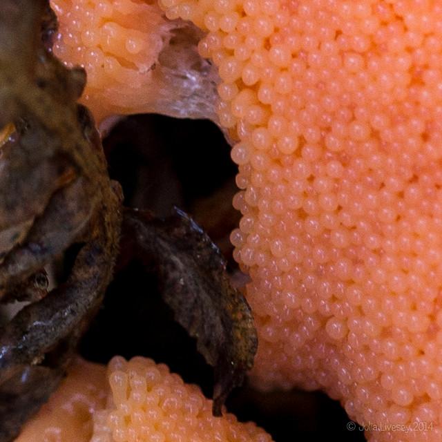 Fungi or eggs?
