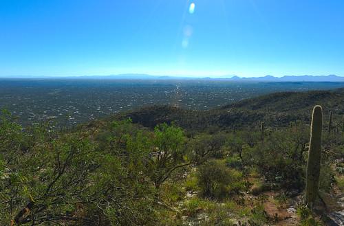 Tucson: Saguaro