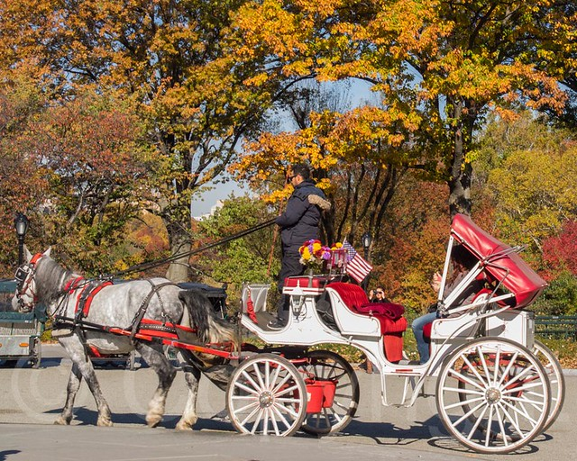 horse drawn carriage ride central park new york city flickr photo sharing. Black Bedroom Furniture Sets. Home Design Ideas