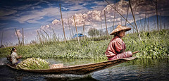 Very young farm workers on the floating gardens of Inle Lake