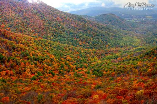 autumn fall virginia fallcolors autumncolors fallfoliage foliage shenandoahvalley shenandoahnationalpark mountainfoliage