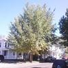 #FallColors #Tree #nelsonville #ohio #AthensCountyOhio #ohiogram #ohioigers #ItsAmazingOutThere