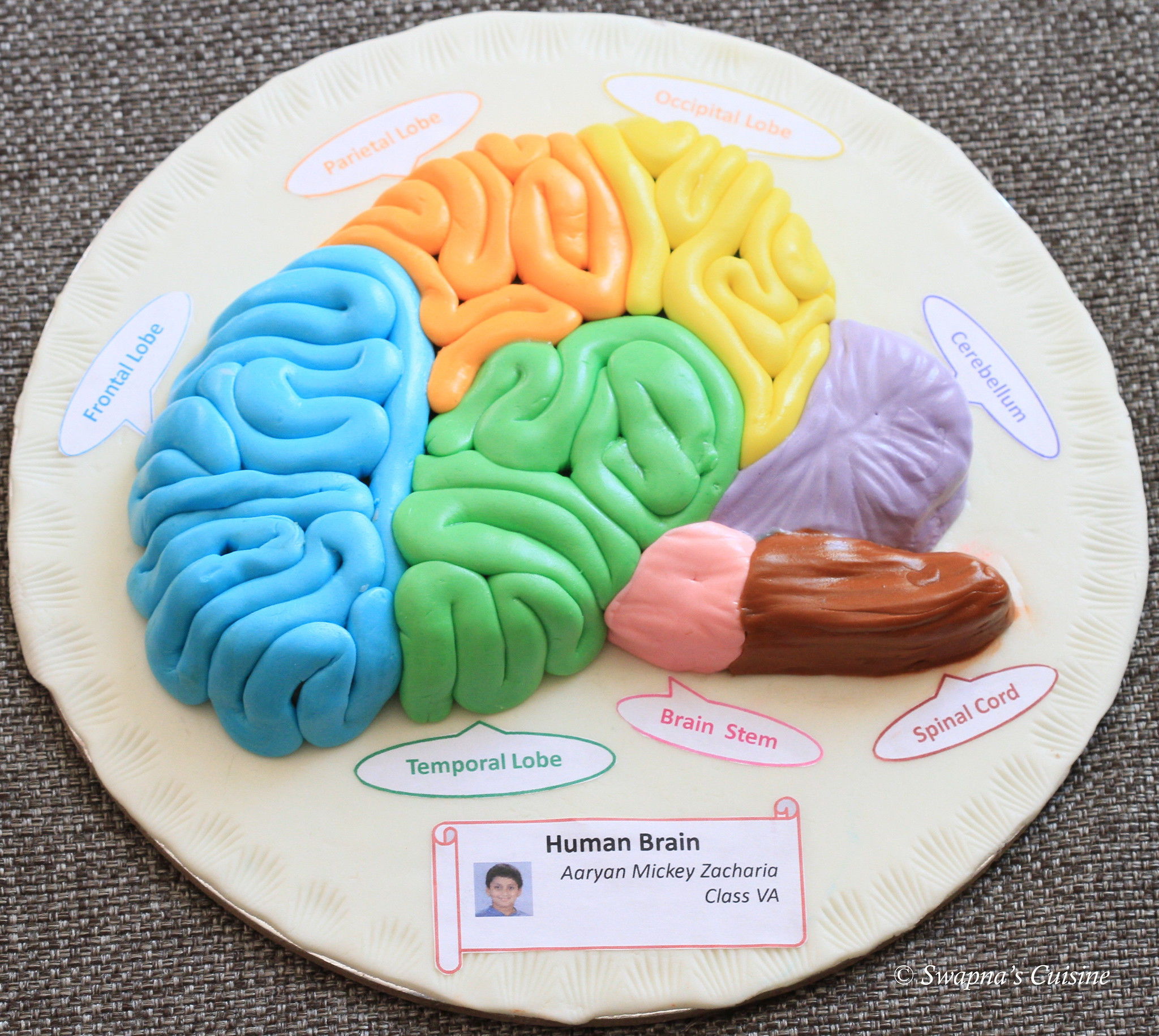 Structure of a Human Brain with Fondant