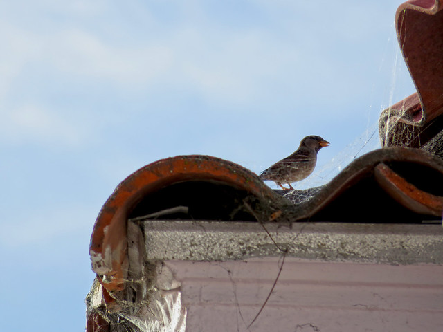 tiled roof and bird; the sunset, San francisco (2014)