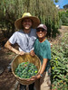 Pineapple guavas at Alemany Farm by funcrunch