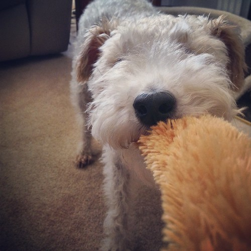 Squeak toys are THE BEST