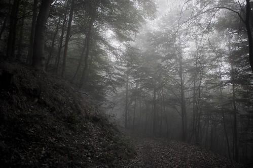 morning mist misty fog canon nebel forrest wald bäume baum ef2470mmf28lusm 6d waldweg eos6d