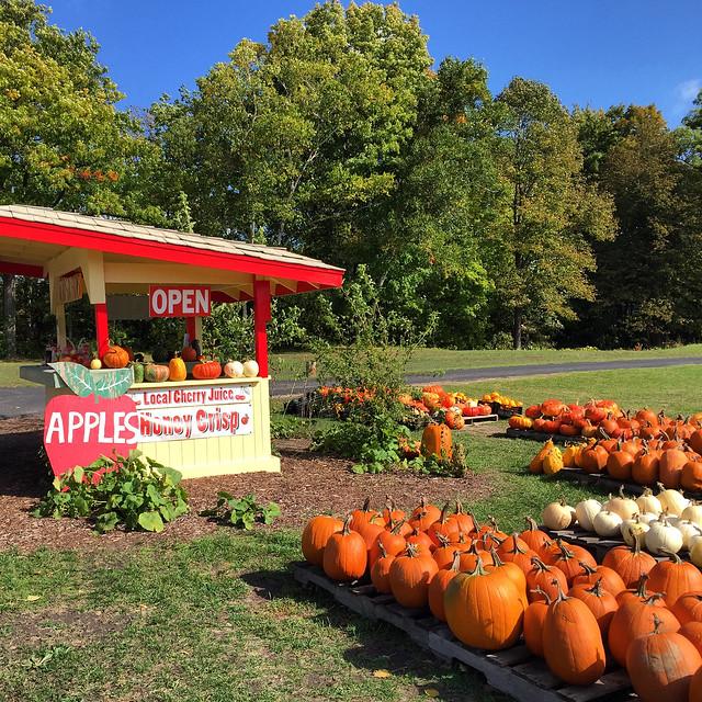 Fall harvest in Michigan