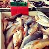 Siakap Senohong Gelama Ikan Duri | #BetulKeGelamaNi | Shah Alam | Selangor | Malaysia