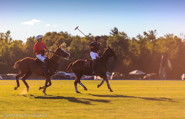 Polo Match in Action
