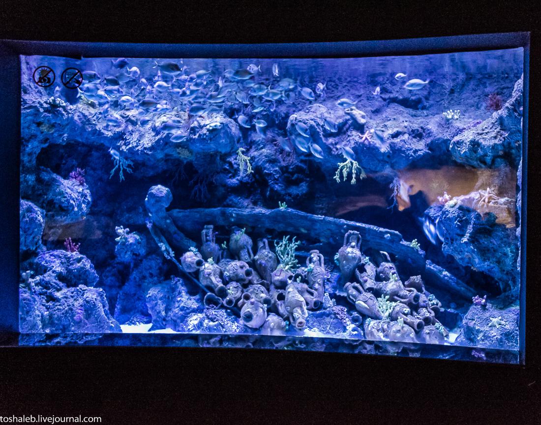 Анталья_аквариум-32