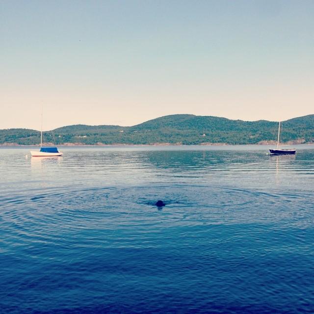 Last morning swim for Huckleberry. Bye for now Lake Champlain!