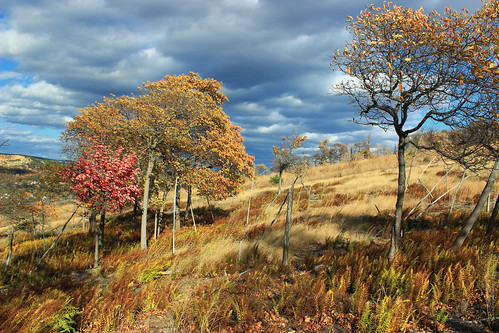autumn trees sky mountains grass clouds landscape hiking pennsylvania hills foliage creativecommons bluemountain appalachianmountains stratocumulus kittatinnymountain carboncounty lehighgap lehighgapnaturecenter
