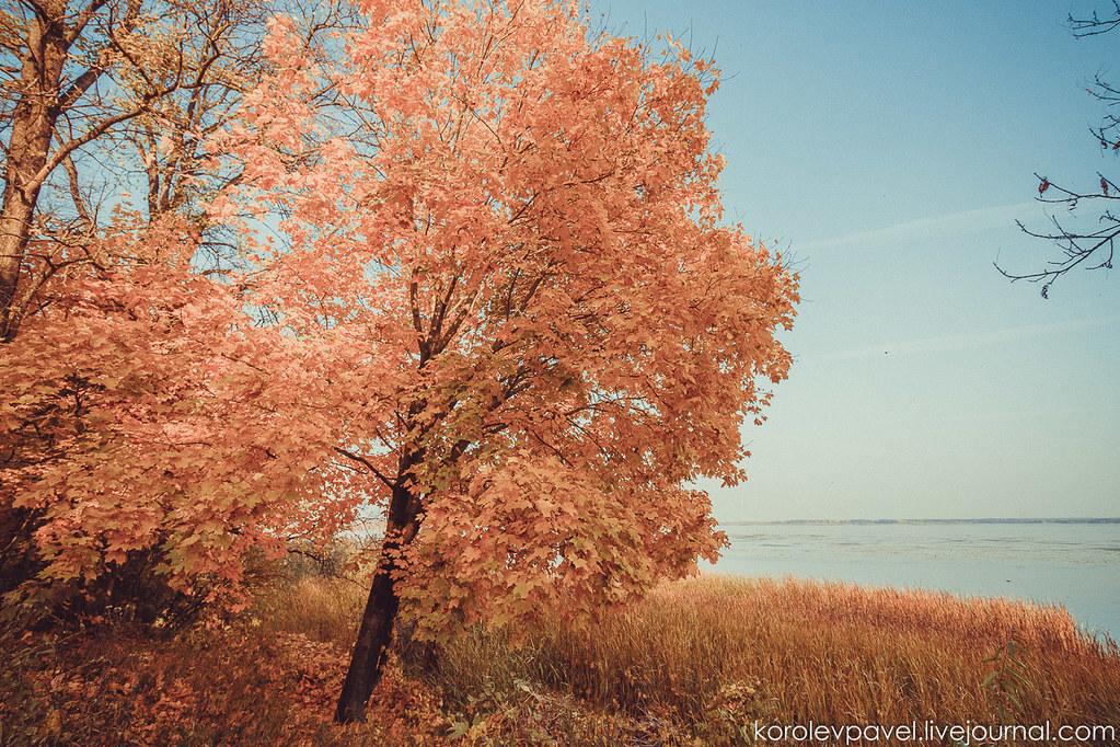 Autumn-253