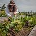 Potrero Community Garden Project, SF, Bridge Housing