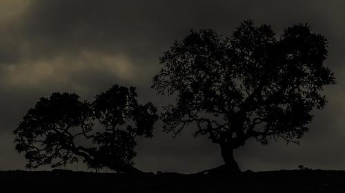 trees blackandwhite bw tree monochrome shadows bangalore siblings karnataka lalbagh sillhouttes blrphotowalk