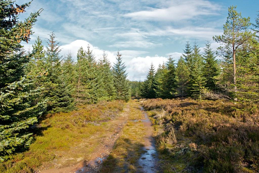 Woods near Pressendye