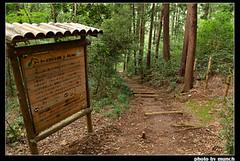 沿著自然手作步道進入森林。圖片來源:munch