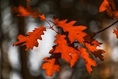 Il calore dell autunno