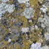 Old stone. Old lichen #heyho2014 #Girona #nofilter