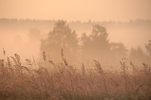 morning summer mist lake nature beautiful field misty fog forest sunrise suomi finland dawn countryside finnland country foggy finlandia フィンランド finlande finlândia finnország finlanda finlàndia финляндия finnishsummer finnlando فنلندا