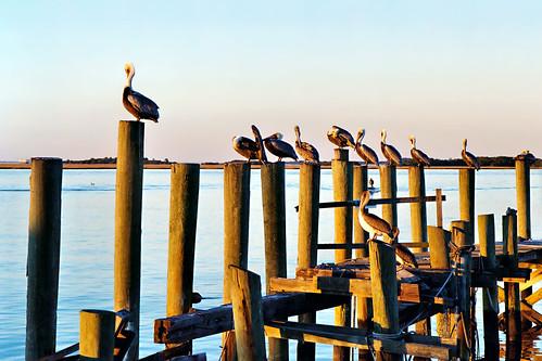 sunset pelicans birds harbor pier post florida pilings fernandinabeach