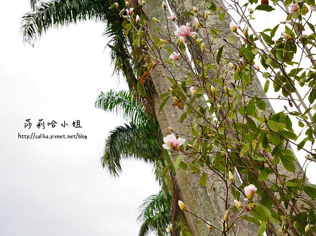 三峽白雞滷味 (21)