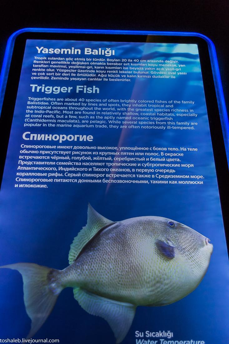 Анталья_аквариум-22