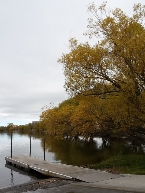 dock and yellow tree on the edge of Lake Bemidji