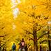 上學去 Go to school / Tokyo, Japan by yameme