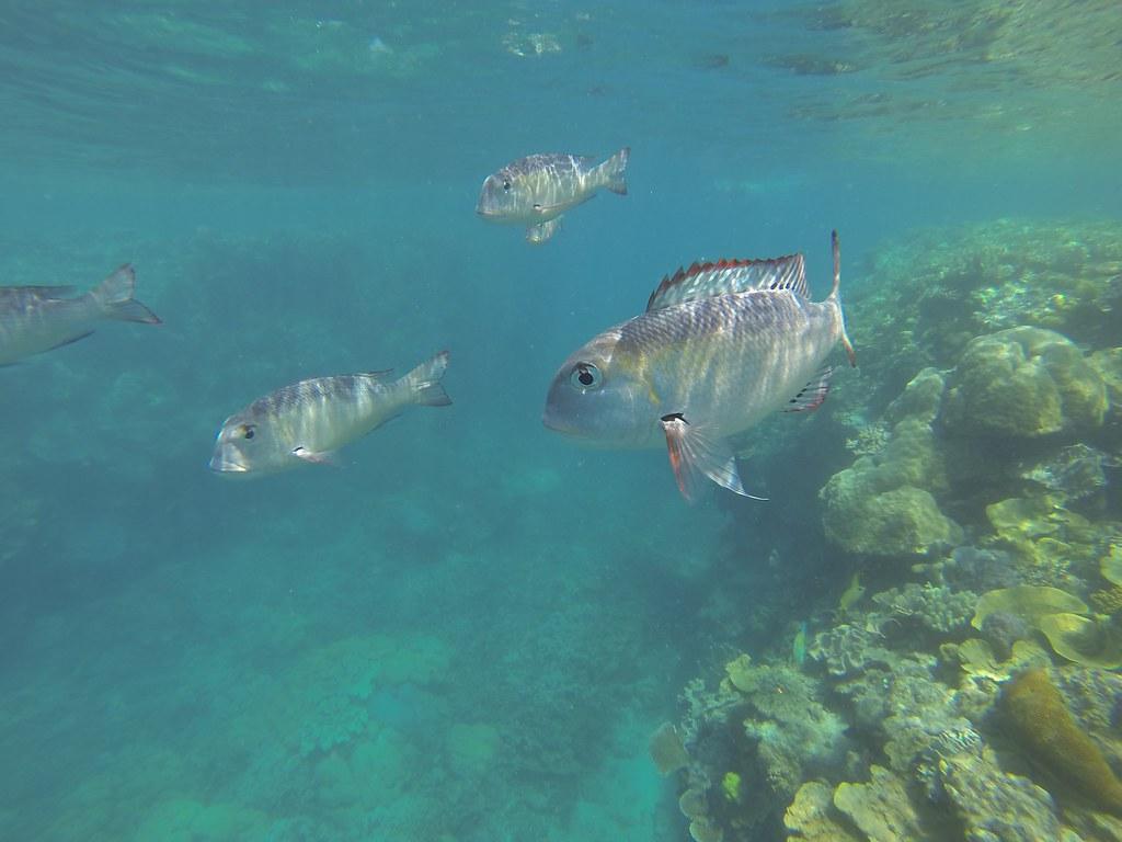 Foto submarina en la gran barrera del coral