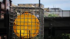 Caged Safey Lamp