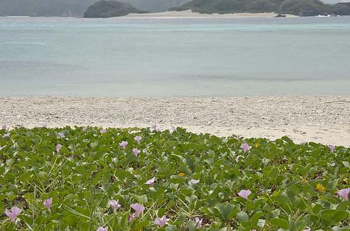 【写真】離島めぐり : 座間味島2