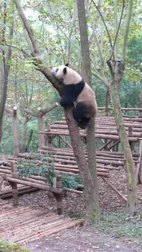 Chengdu-Teil-2-009