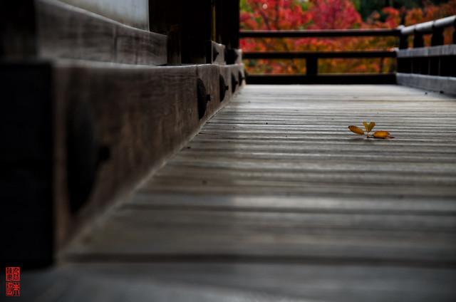 「秋音」 仁和寺 - 京都