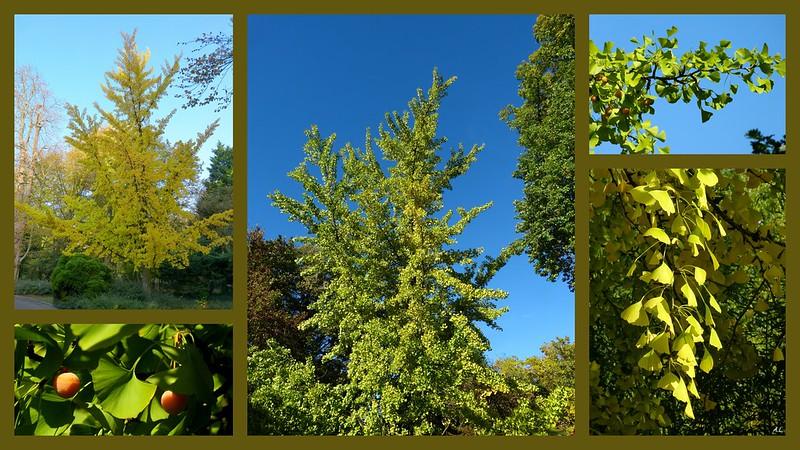 Un bel arbre en toute saison