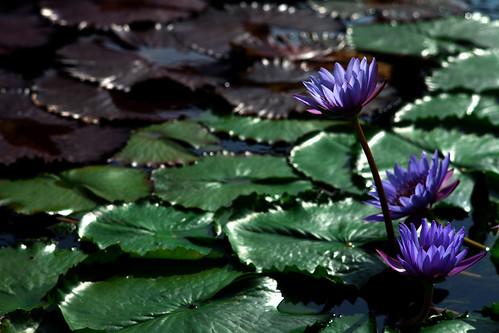 china light shadow flower hongkong view bokeh fullframe canoneos5dmarkii nikkorpauto105mmf25nonai