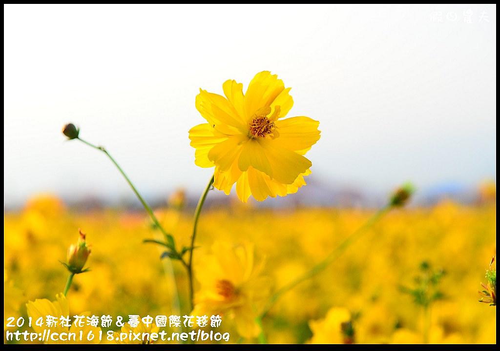 2014新社花海節&臺中國際花毯節DSC_4842
