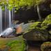 Oakland Falls, Blue Mountains, Australia