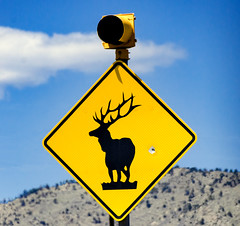 Someone shot at an elk and missed