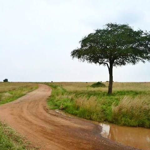 instagramapp square squareformat iphoneography uploaded:by=instagram africa kenia paisaje arbol camino