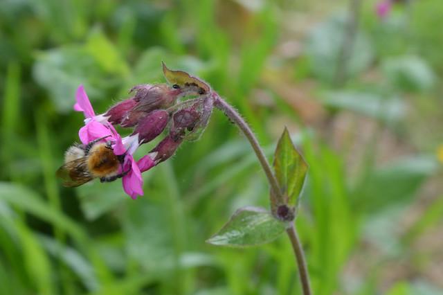 #28 - Pollinating