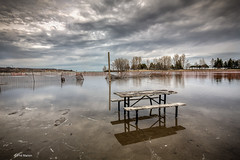 Flooded Woodbine Beach pond - Toronto