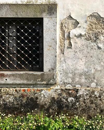 cicatrizes   futuro projecto por @eva_atelier   #silence #quiet #rural #trees #valedecambra #igersportugal #leaves #portugal #trees #portugaldenorteasul #sky #shadow #light #valemagico #nothingisordinary #green #plants #portugalcomefeitos #portugal_de_son