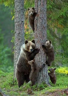 animal family012
