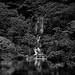 滝を追いかけて [Chasing Waterfalls]