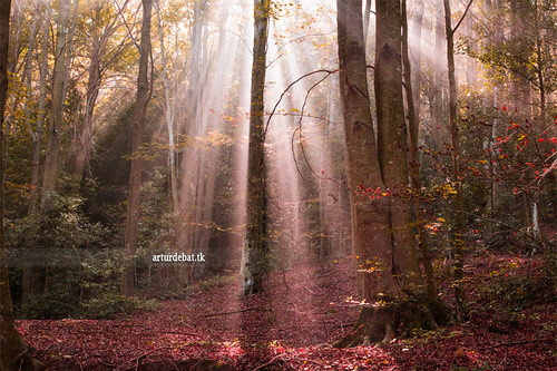 """trip morning travel autumn trees light orange color nature colors beauty fog forest wow landscape amazing nice interesting woods holidays warm europe tour place superb magic awesome great ground catalonia unesco route stunning viatge moment dust sunrays leafs vacations impressive beech mystic sunbeams gettyimages rayos fageda montseny rajos arturii arturdebattk """"canonoes6d"""""""