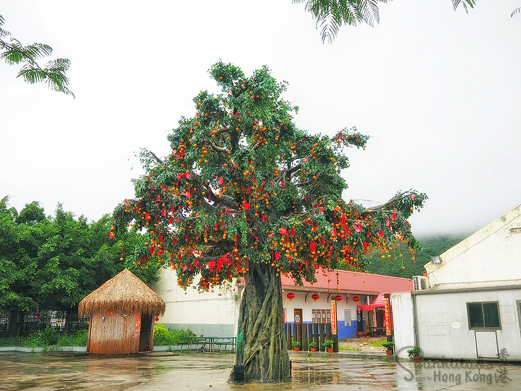 Lam Tsuen Wishing Tree 林村許願樹